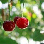 Jaká strava je ideální pro letní období?