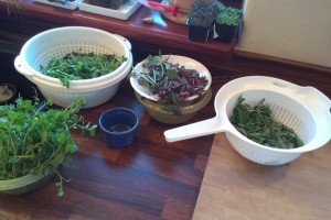 plana zelenina donesena na vareni