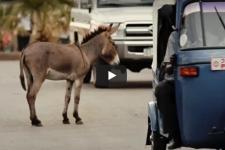 Mrtví osli se hyen nebojí – festivalový film č.2