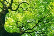 Stromy se na nás dívají
