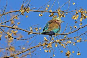bird-515031_1280