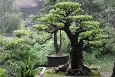 Energie stromu ve feng-shui