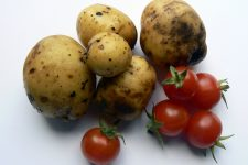 Zaměřeno na rajčata a brambory