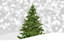 Už máte vánoční stromeček?