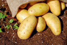 Když brambory, tak chytře skladované