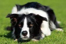 Chov psů a makrobiotika