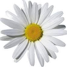 Floraa